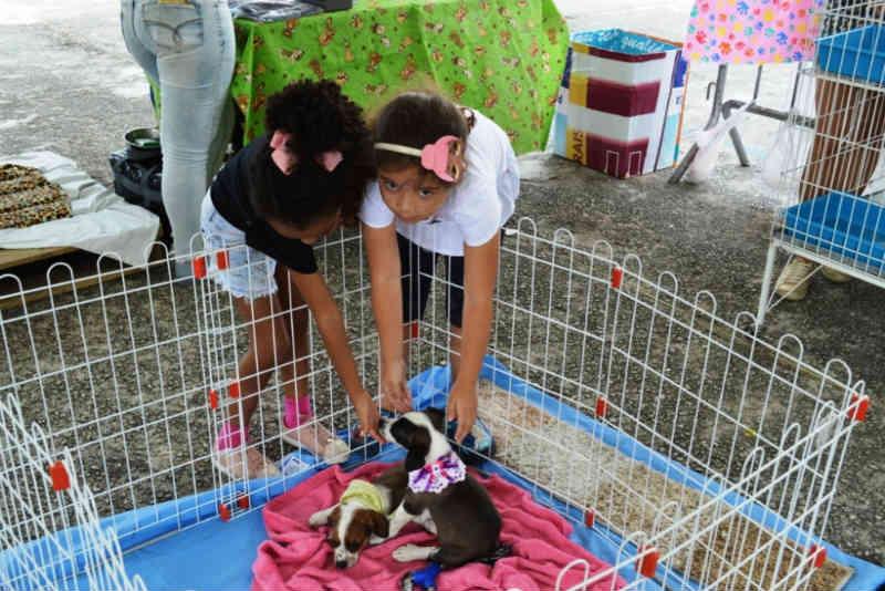 Cães e gatos ganham novo lar na I Feira de Adoção de Teresópolis, RJ