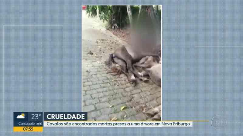 Polícia vai investigar morte de cavalos enforcados em árvore no RJ