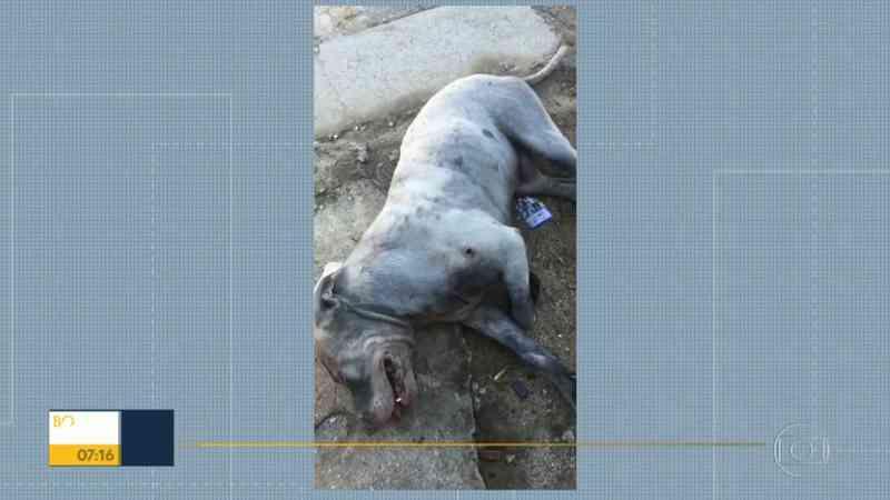 Cachorro é atingido por três tiros na Baixada Fluminense, no RJ