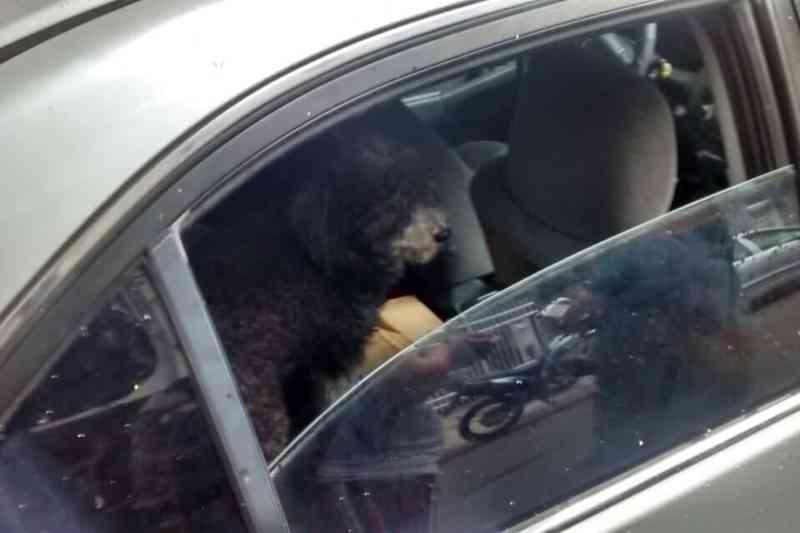 Cachorro é encontrado trancado em carro estacionado em Copacabana, no Rio