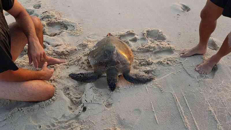 Tartaruga presa em rede é devolvida ao mar em Saquarema, no RJ