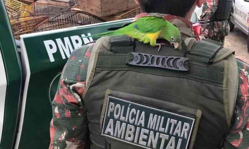 Foto: Cipam / Divulgação
