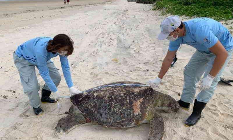 Biólogos recolhem amostra da tartaruga. Foto: Projeto Cetáceos/Cedida