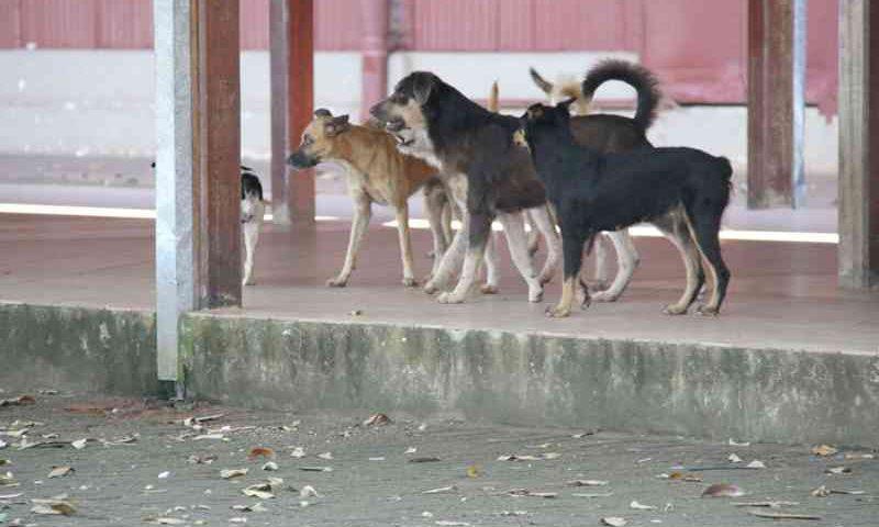 Prefeitura de Porto Velho (RO) implanta projeto Bem-estar Animal