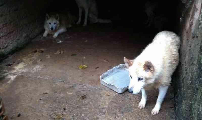 Mais de 220 cães são resgatados em canil no interior de Barão de Cotegipe, RS