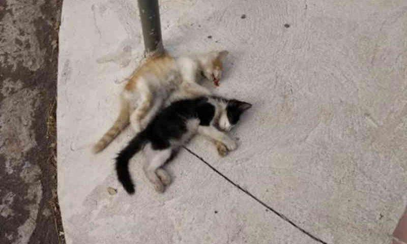 Gatos são mortos em ritual religioso, em Passo Fundo, RS