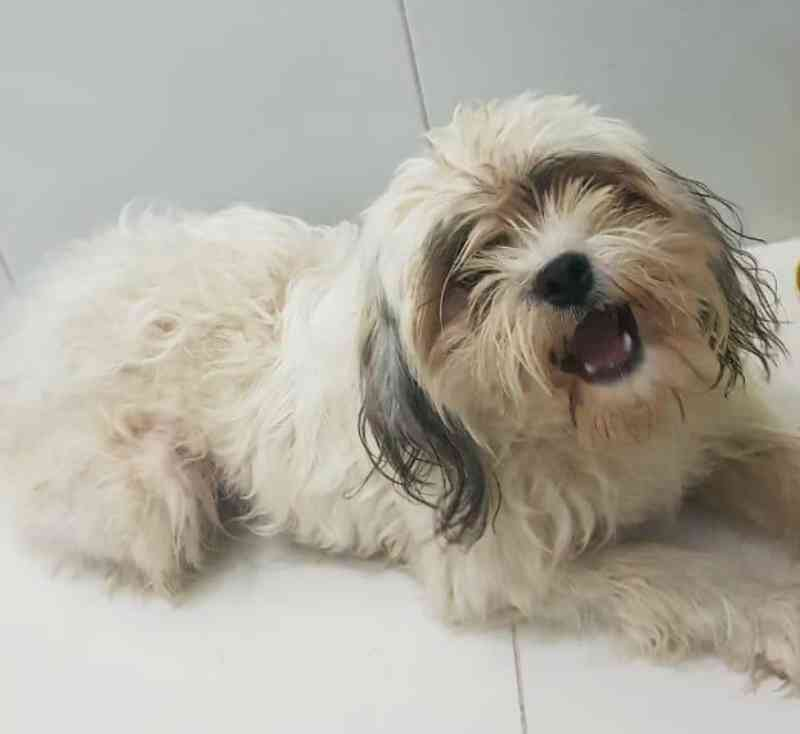 ONG de Taquari (RS) resgata cão que havia sido preso em um caixote e deixado na chuva