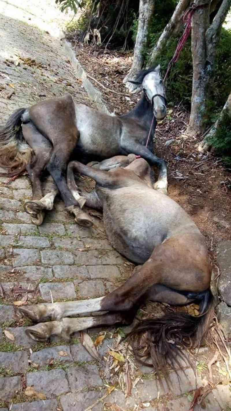Cavalos morrem enforcados por corda amarrada em árvore no RJ