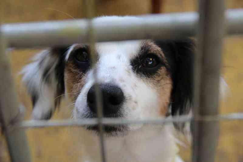 Saiba como denunciar maus-tratos aos animais em Santa Cruz do Sul, RS