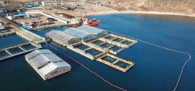 Chocante! Encontrada prisão ilegal de baleias na Rússia com mais de 100 animais marinhos cativos