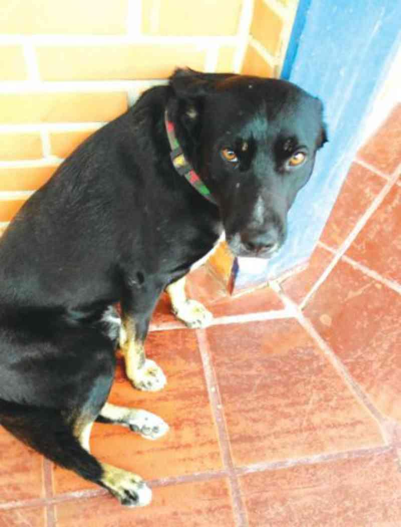 Cão comunitário, Negão não vai ter que ir embora de campus da Univali em Balneário Camboriú, SC