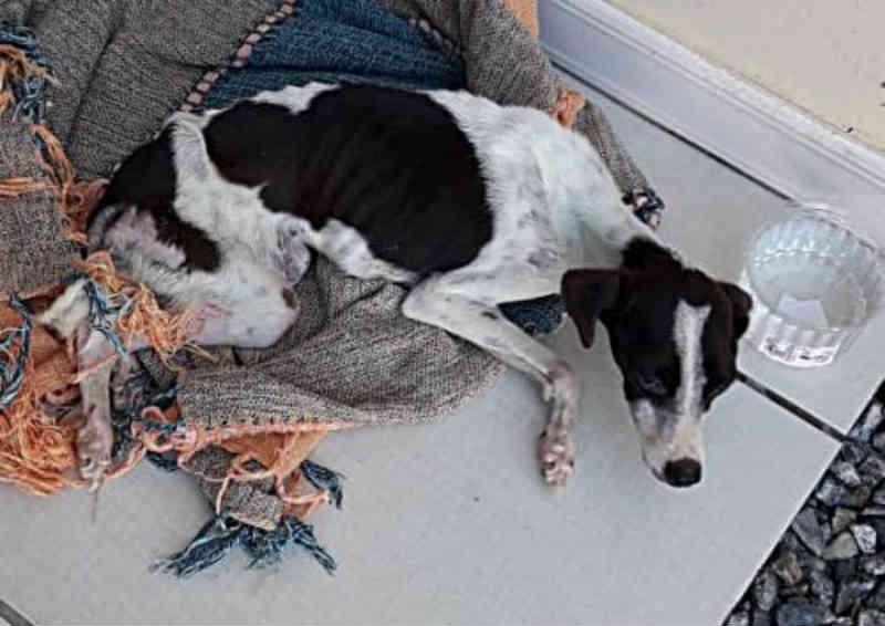 PM resgata cachorro doente em Camboriú, SC