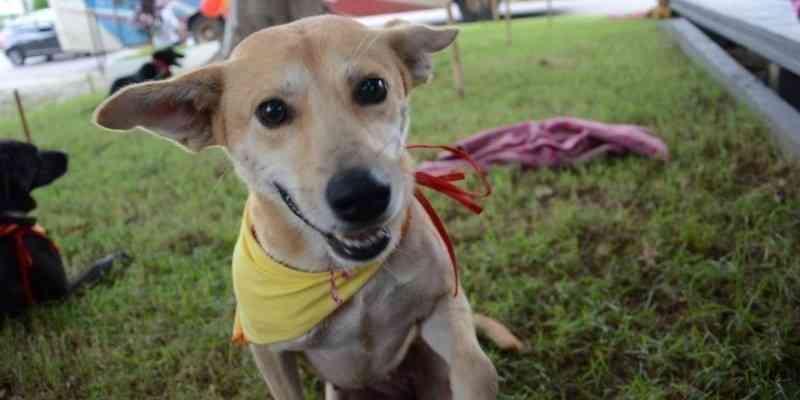 Mutirão de castração de cães e gatos acontece neste sábado em Criciúma, SC