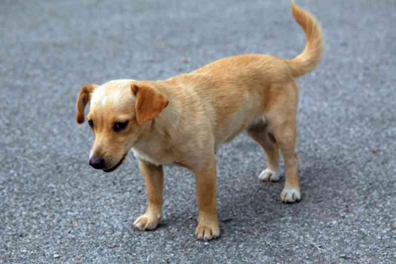 Vídeo mostra momento que cachorro é abandonado após ser atropelado em SC