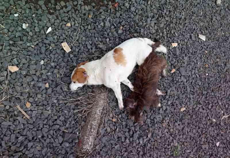 Gatos e cachorros são mortos por envenenamento em bairro de Ponte Serrada, SC