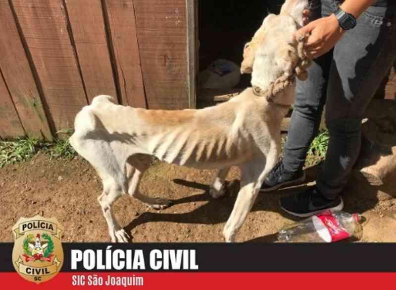 Polícia Civil resgata animais vítimas de maus-tratos em São Joaquim, SC