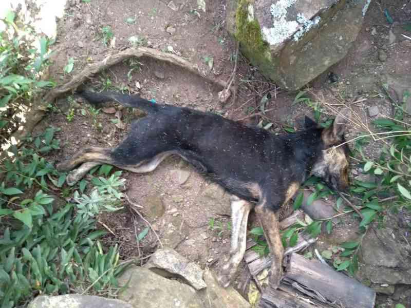 Crueldade sem fim – Animais continuam sendo envenenados em São Joaquim, SC