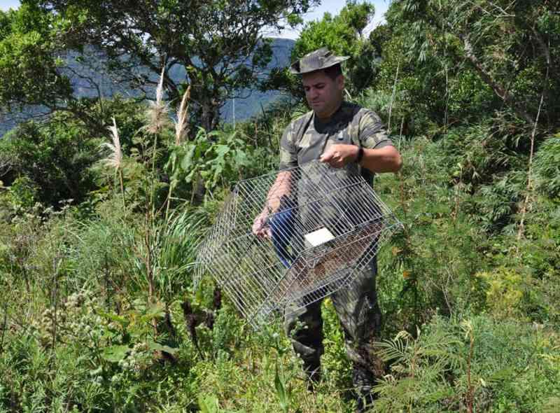 Gralha-azul é devolvida à natureza após reabilitação em Timbé do Sul, SC