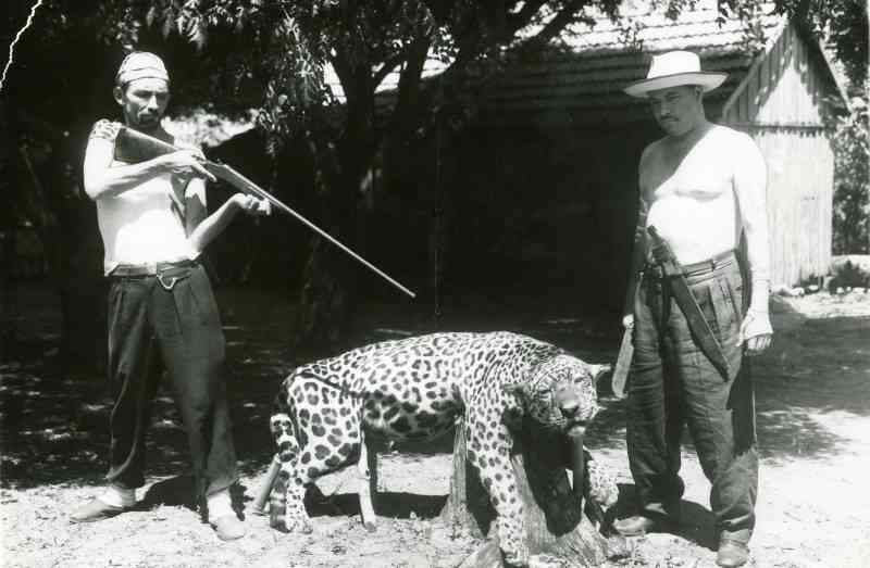 Evolução jurídica e estado da arte da legislação referente à caça no Brasil