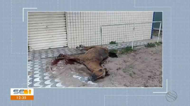 Cavalo com suspeita de maus-tratos agoniza até a morte em calçada na Barra dos Coqueiros, SE