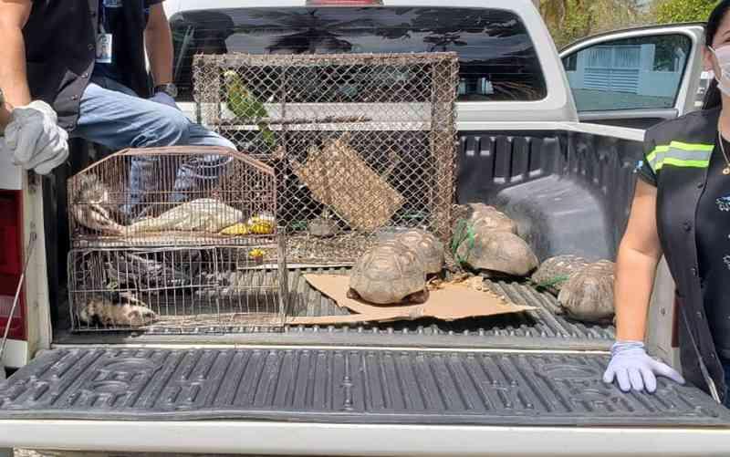 Animais silvestres são recolhidos pela Adema em dois municípios sergipanos