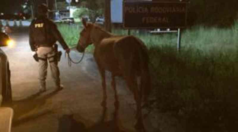 Tutora de cavalo solto em rodovia federal em Sergipe é identificada pela PRF
