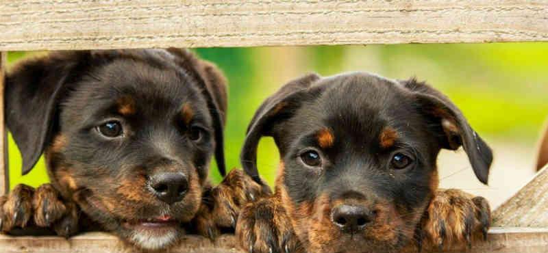 Atibaia (SP) inicia programa de castração de animais 2019