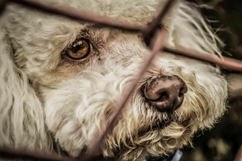 Itapevi (SP) resgata 400 animais vítimas de maus-tratos