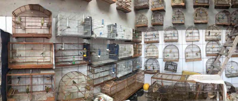 Quase 200 aves são resgatadas de cativeiro no Parque Meia Lua em Jacareí, SP