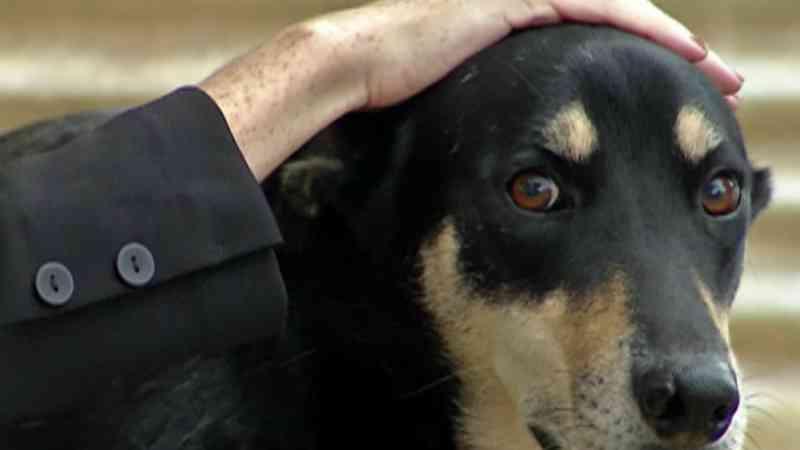 Cães de Mogi (SP) são cuidados de forma comunitária; vereadora quer fomentar a atividade na cidade