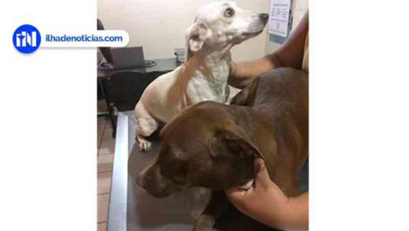 Cachorros são envenenados, mas sobrevivem, em Ilha Solteira, SP