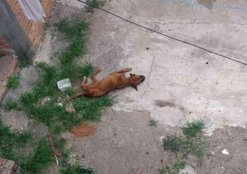CCZ resgata cachorro infestado de carrapatos e notifica tutor em Piracicaba, SP