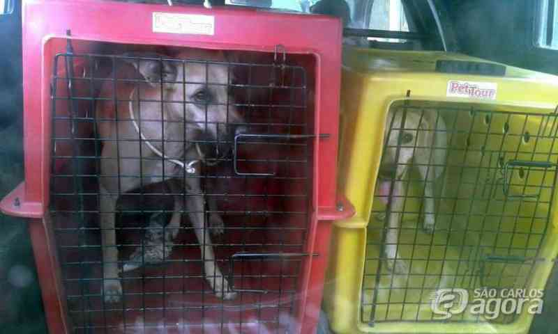 Cães que foram abandonados por antigos inquilinos são resgatados no Aracy, em São Carlos, SP