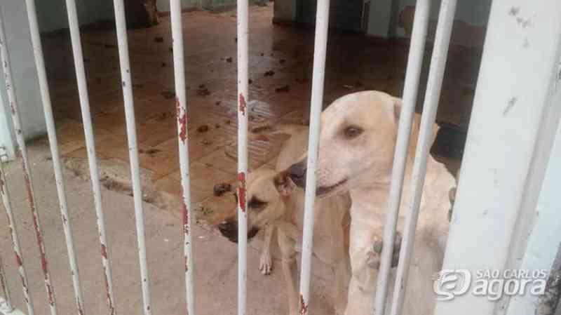 Inquilinos vão embora e abandonam três cães, afirma proprietária da casa em São Carlos, SP