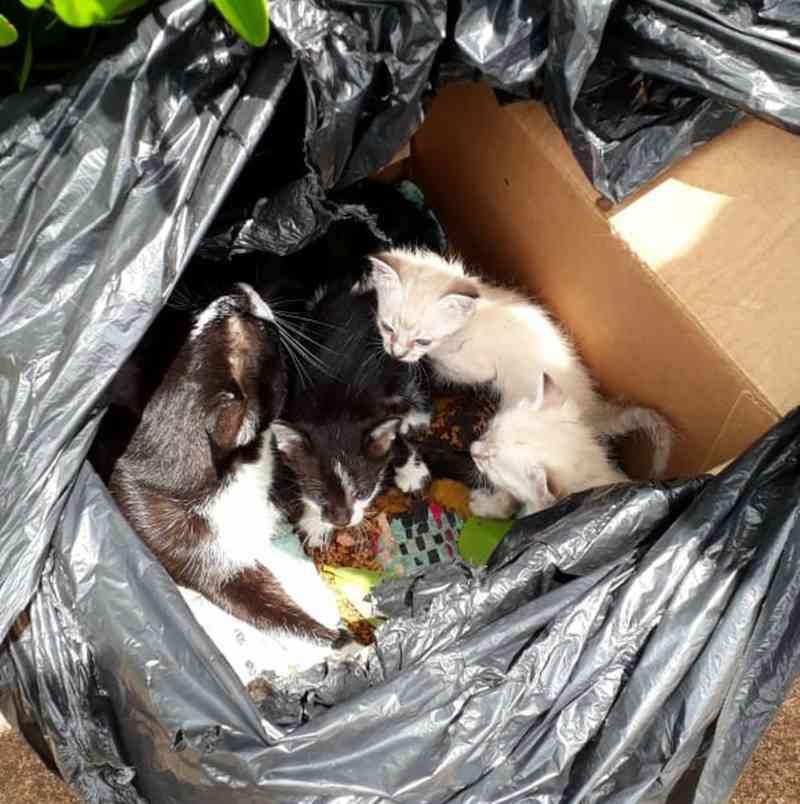 Filhotes abandonados em saco de lixo são adotados por estudante em Rio Preto, SP