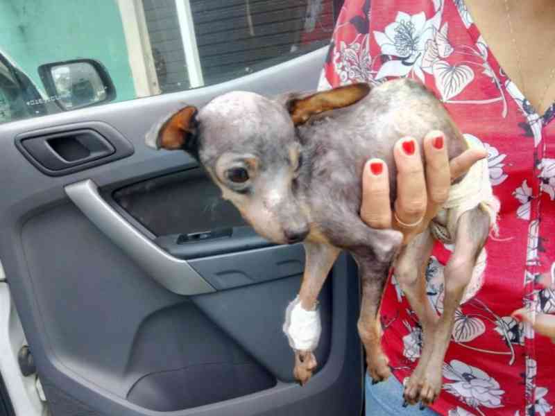 Ambiental, Zoonoses e Veterinária resgatam cachorro vítima de maus-tratos em São Sebastião, SP