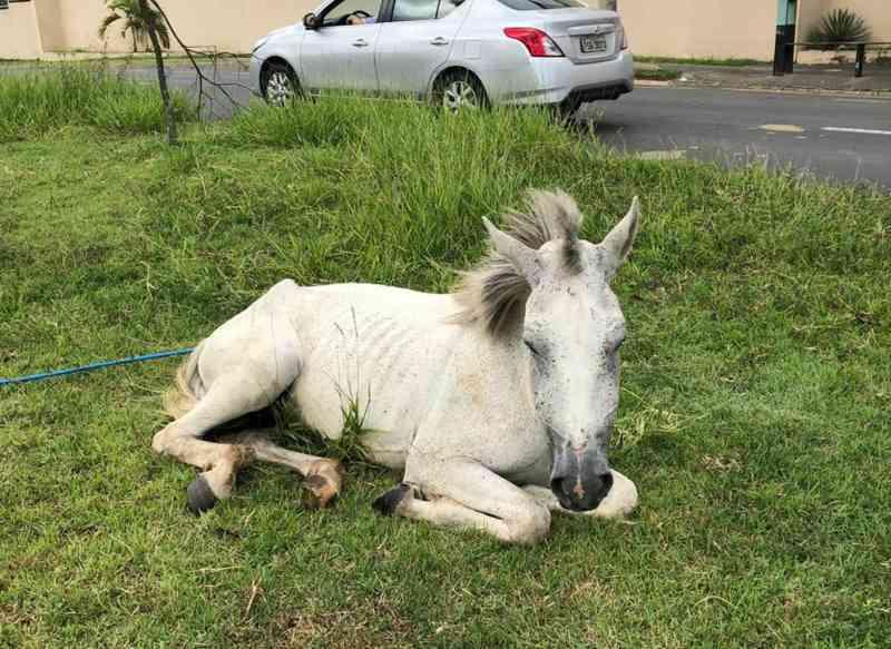 Cavalos em situação de abandono preocupam moradores do Jardim Itanguá, em Sorocaba, SP