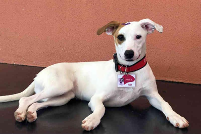 Cães de rua são adotados e ganham até crachá no Sesi-SP