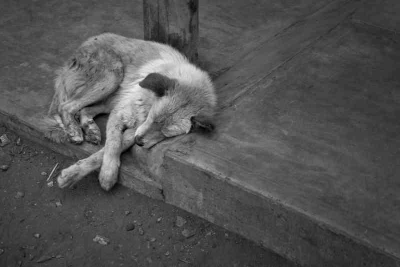 Cresce o número de animais abandonados em Itajobi (SP), diz Prefeitura