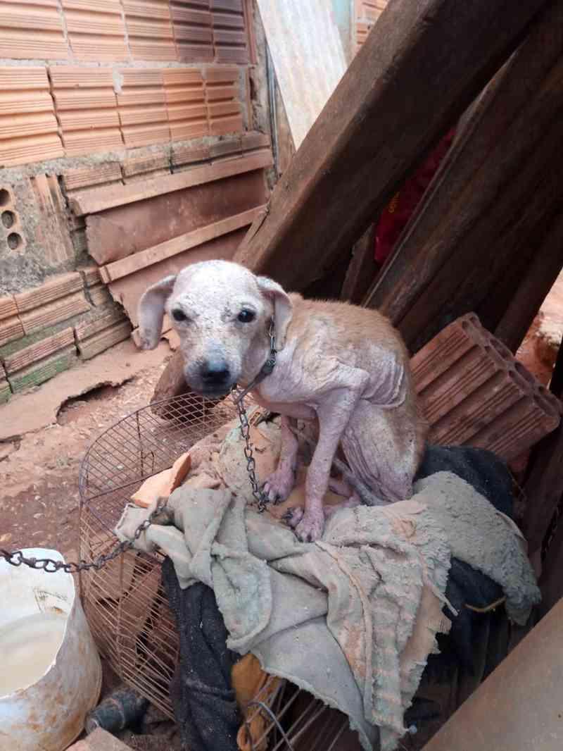 Polícia Ambiental apreende mais de 10 cachorros com sinais de maus-tratos em Itapeva, SP