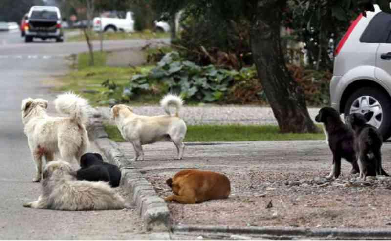 Prefeitura de Mairinque (SP) alerta para crime de maus-tratos e abandono de animais