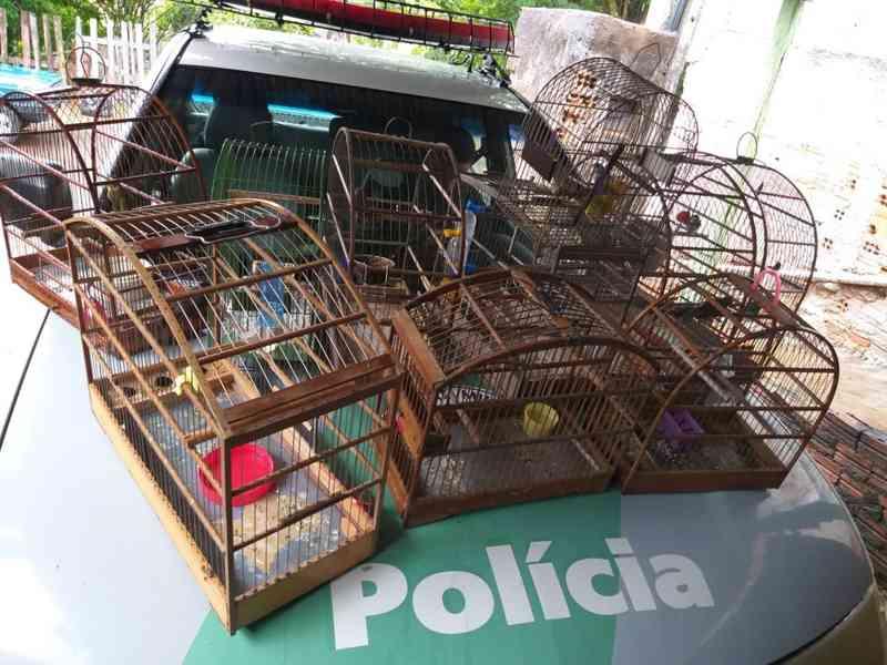 Fiscalização resgata aves mantidas irregularmente em cativeiro em residência em Presidente Prudente, SP