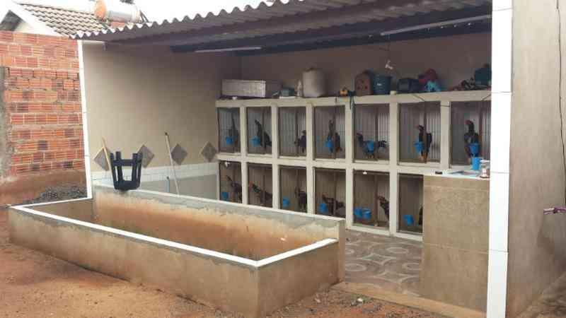 Suspeito de praticar roubos é preso e ainda leva multa de R$ 48 mil por promover rinhas de galo em Rio Preto, SP