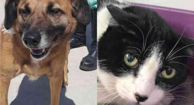 Prefeitura de SP faz campanha de adoção de cães e gatos. Veja as fotos