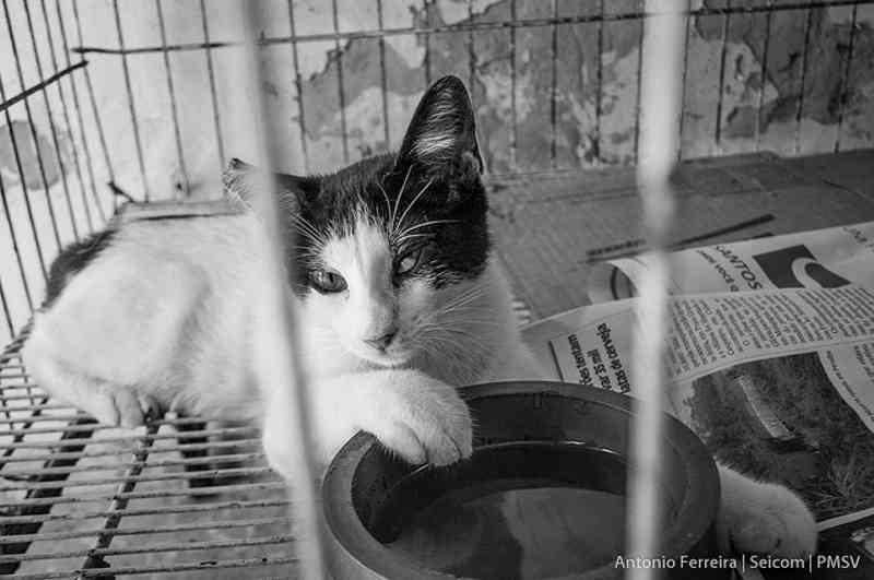 Zoonoses de São Vicente (SP) tem 19 animais para adoção, entre cães e gatos