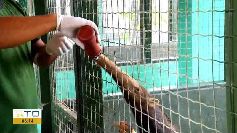 Tamanduá precisa ser alimentado com mamadeira — Foto: Reprodução/TV Anhanguera