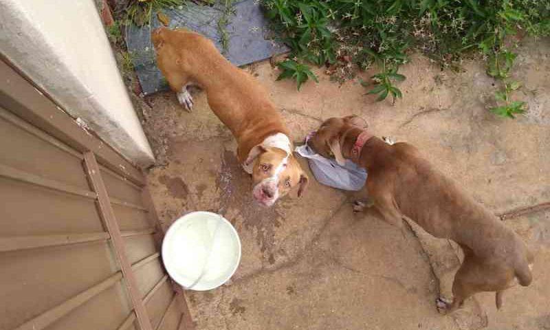 Animais estavam presos na casa há 36 dias — Foto: Divulgação/Françoaise Nunes de Andrade
