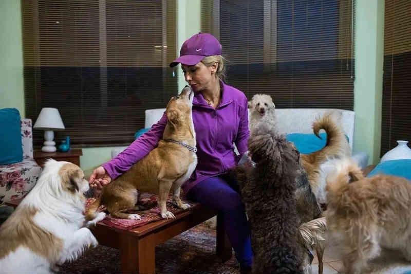 Teerã proíbe passeios com cachorros em áreas públicas