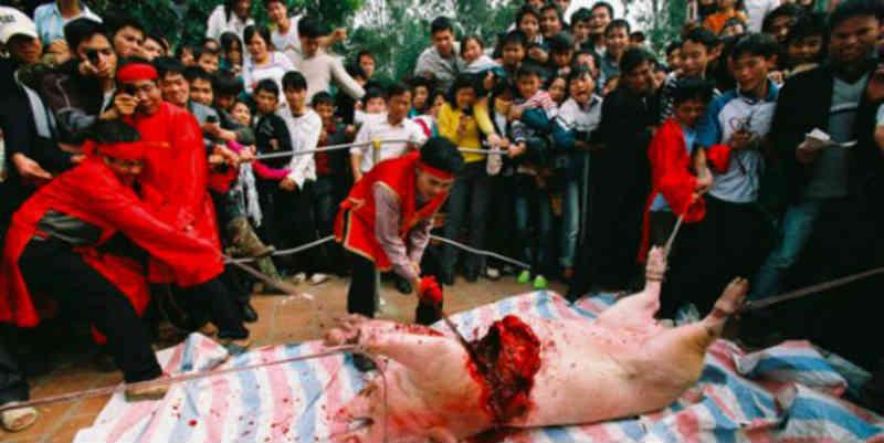 Este festival cruel do abate de porcos precisa de terminar agora
