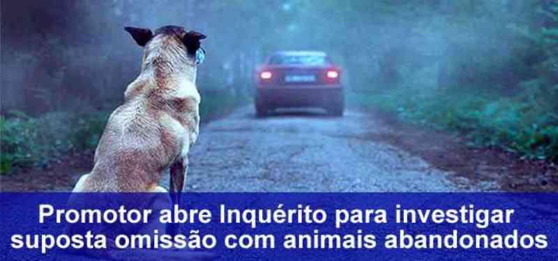 Promotor abre inquérito para investigar suposta omissão com animais abandonados em Rio Branco, AC